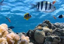 Why conserve energy for Fish farming pros and cons